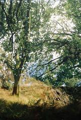Woods 4 (avenwildsmith) Tags: film 35mm nature devon countryside analog analogue kodak retinette 1b grain england britain wild wilderness double exposure tree trees plants woods forest 35mmfilm kodakretinette1b