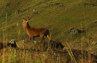 Argentina Red Stag Hunt Cordoba 52