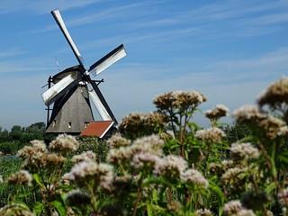 Olanda - mulino a vento