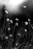 Grass Art (wi dodow) Tags: nature flora blackwhite gettyimages flickr bw desaturate
