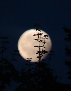 Plant on lunar eclipse