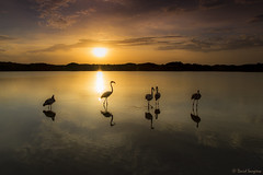 Choosing The Heading. [Explored & FP 09-15-2017] (dasanes77) Tags: canoneos6d canonef24105mmf4lisusm tripod landscape waterscape lake clouds cloudscape sun sunrise sunrays reflections shadows wildlife nature flamingos unexpected valencia albuferaofvalencia dunes interview
