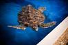 Projeto Tamar - Praia do Forte 11 (OtCirc Fotografia) Tags: projeto tamar projetotamar praiadoforte praia forte tartarugas marinhas tartarugasmarinhas água turtle beach water animals birds shark tubarão nikon d90 nikond90 brasil brazil bahia litoral viagem trip travel vacation férias