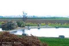 Gartenkunst (jubasoft) Tags: badenwürtemberg d3200 deutschland felder grün green gelb lightroom6 nikon raw brown braun yellow teich hochemmingen