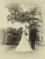 gut abgeschirmt (gabrieleskwar) Tags: outdoor braut bräutigam schwarz weiss bäume licht schatten schirm brautkleid park portrait hochzeit