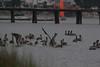 IMG_9737 (armadil) Tags: mavericks beach beaches californiabeaches boat sailboat bird birds pelicans pelican harbor