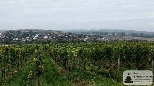 Weinlese bei Appenheim