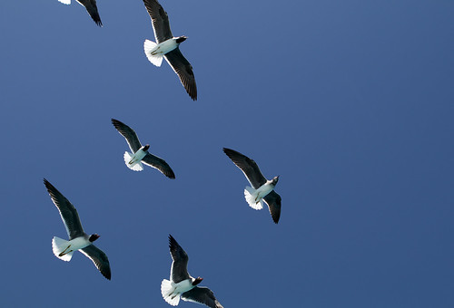 Birds over the Red Sea