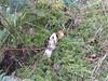 Northumberland 002 (ajchorley) Tags: fungus mushroom stinkhorn