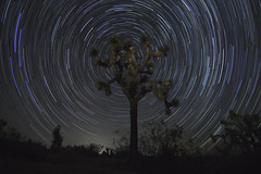 Star Trails at Joshua Tree National Park (johngoucher) Tags: review astrophoto astrophotography joshuatree tree joshuatreenationalpark stars startrails northstar night nightsky sky darkness california desert coachella nature outdoors sonyimages sonyalpha travelphotography bellecampground