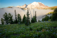 Above the clouds (P Matthews) Tags: morning mtrainier landscape wildflowers alpine emmonsglacier fog sunrise vista clouds