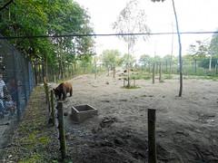 Bear + Wolf (Going to the Zoo with Trebaruna) Tags: landgoedhoenderdaell hoenderdaell dierenparkhoenderdaell annapaulowna zooannapaulowna dierenparkannapaulowna netherlands enclosures 2017 07082017