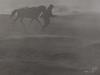 (Nelson Chee) Tags: amazingindonesia mountbromo horseman marlboro d810
