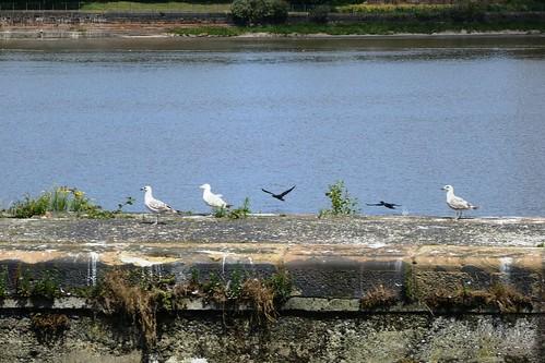 Sea Birds On The Canal