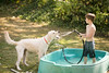 frodo-service-dog-in-training-18 (Little Earthling Photography) Tags: dog labradoodle water servicedog boy summer