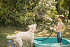 frodo-service-dog-in-training-15 (Little Earthling Photography) Tags: dog labradoodle water servicedog boy summer