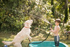 frodo-service-dog-in-training-12 (Little Earthling Photography) Tags: dog labradoodle water servicedog boy summer