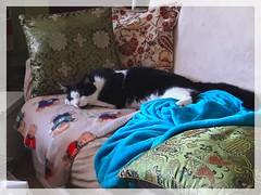 20170717_135517_Fotor (Bernsteindrache7) Tags: summer animal cat color handy house home pet indoor