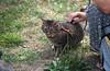IMG_2559 (kz1000ps) Tags: boston massachusetts bostoncommon common park cats kitties kittens felines caturday purr catcafe brighton humane society adoptions