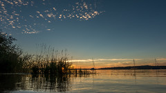 last light of the day (hjuengst) Tags: sunset sonnenuntergang clouds lake ammersee weed gras sailboat bavaria