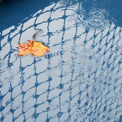 no tennis today (jim_ATL) Tags: tennis court net reflection rain puddle droplets ripple yellow leaf atlanta