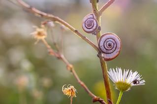 A nature still life...