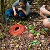 A happy find (bill.I.am) Tags: rafflesiaspeciosa carrion flower philippines miagao iloilo panay parasite holoparasite