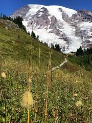 IMG_4498 (Bites N Sites) Tags: seattle washington mount rainier wild flowers