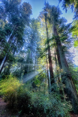 Light Through Tall Trees (Beth Sargent) Tags: bigbasin california redwoods trees light rays forest landscape nature woods explore