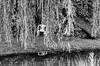 "Geheimer Sitz...-Secret Seat-B&W (Siggi-Dee) Tags: ""leica elmar 50mm f28 35mm b26w blackandwhite color digital film japan kodak leica leicam6 leicam9 leicamp m9 tokyo voigtlander street rangefinder leicam5 wetzlar solms"