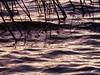 Water movement - Mouvement de l'eau (monteregina) Tags: québec canada ca motion eau water formes shapes reflets nature natur détails details designs rivièredesoutaouais ottawariver patterns lines lignes monteregina abstraction natural ciel sky waterabstract ondulations ripples waterart abstract abstrait watersurface surfacedeleau naturetextures naturalabstractions abstraitnaturel artofwater ondulationsréflectives reflectivesripples réflexionsabstraites réflexions reflections ondulationsreflectives texture minimal waterreflections refletssurleau abstractpaintingbynature peintureabstraiteparnature spiegelung purpletons tonspoupres vagues waves waterpainting wasserabstrakt