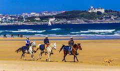 6 3+3 1 (Walimai.photo) Tags: horse caballo playa beach three tres seis 3 6 1 perro dog people gente candid robado mar sea cielo sky ola wave nikon d7000 18105
