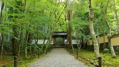 "A path of Zen / Kyoto ""Bamboo Temple"" Jizo-in (maco-nonch★R) Tags: kioto kyoto jizoin bambootemple temple tempel templo 竹の寺 地蔵院 青もみじ 一休 一休禅師 zen zentemple path entrance 京都 september rinzai 臨済宗 buddhism japanesebuddhism buddhist manualexposure af efm18150mmf3563isstm canon eosm5 生誕地 birthplace imagestabilizationoff 日本"