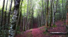 Paseo por el bosque (jumaro41) Tags: bosque paseo senderismo árbol árboles eugi navarra green hojas monte montaña mountain nnaturaleza nature natural tree troncos verde vida