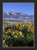 Grand Teton National Park...  Antelope Flats (John's Love of Nature) Tags: grandtetonnationalpark antelopeflats johnkelley