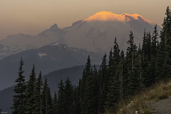 Mountains (Sushil Bal) Tags: mtrainier sunrise nikon nikond500 d500 sunrisepark 2017 august landscape snow wildflowers wild mountains washington ashford yakima rainier2017landscapemtrainiernikonnikond500sunrisesunrisepointwildflowers