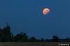 Teilverfinsterter Vollmond über dem Osthorizont (astrofan80) Tags: astronomie bäume dämmerung mofi2017 mond mondaufgang mondfinsternis stromleitung treppendorf abendhimmel lunareclipse