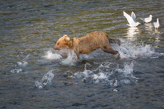 Cub Attempting to Fish-