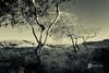 Lytham Copse (GraemeKelly) Tags: graemekellyphotography graeme kelly landscape landscapes light lytham stannes sand dunes copse trees mono lancashire