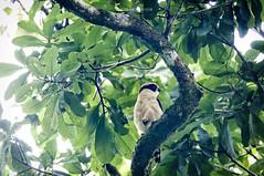 Nicaragua -Centro Ecologico Los Guatuzos:  unknown bird (Exper!ence it) Tags: nicaragua centro ecologico los guatuzos nature wetlands swamp birds cayman