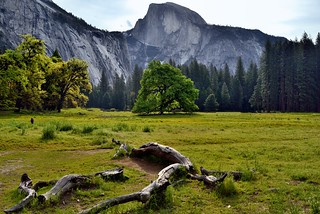 A Fellow Photographer in a Meadow Setting with a View to Half Dome (Yosemite National Park)
