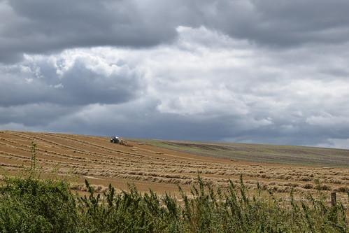 Wiltshire arable farmland