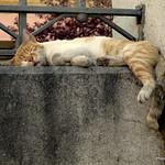 El Gato del Cementerio thumbnail