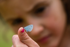 Olivia looking at holly blue (Ian Redding) Tags: british celastrinaargiolus european lepidoptera lycaenidae uk biology blue butterfly child examing fascination fauna finger girl hand hollyblue insect interest invertebrate lookingat naturalhistory nature onfinger science stem underside wildlife young