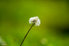 Nature Photography (meier2k8) Tags: canon outdoor summer wildlife canonphotography canonphotos canont5i canonography digitalphotography macro macrophotos macroshots macrophotography