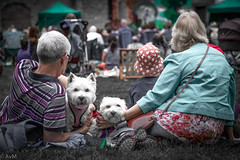 Not everybody is watching the show (Ramireziblog) Tags: people watching dogs croft castle shropshire canon 6d candid street
