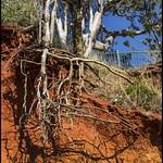 Erosion Red Cliffs of Scarborough 20Aug17-08= thumbnail