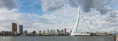 Panorama of the Erasmus bridge Rotterdam (CapMarcel) Tags: panorama erasmus bridge rotterdam contains multiple photos vertical stitched together the connects south with north is now days crucial interlink for traffic
