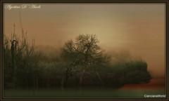 In una mattina di nebbia - Agosto-2017 (agostinodascoli) Tags: nebbia foschia cianciana sicilia nikon nikkor texture nature landscape paesaggi alberi agostinodascoli fotoshop photopainting digitalart art colore