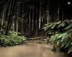 17-8-2017 otways-8 (brody_d_webb) Tags: australia victoria otways 12 apostles 12apostles waterfalls olympus emdem1m2 nature beauty natural ocean greatoceanroad surfcoast